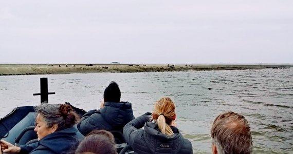 zeehonden - spotten - team - collega
