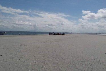 Zon - zee - strand - bedrijfsuitje - zeehonden