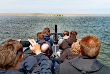 Zeehonden - strand - genieten - boot
