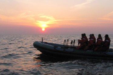 Zeehonden Spotten - RIB varen voor rust en natuurzoekers