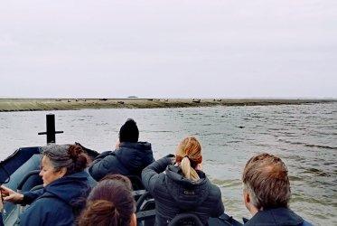 zeehonden - zeehond - varen - strand