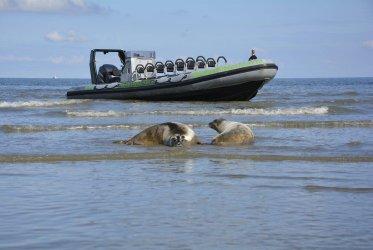 Zeehonden spotten - rust natuur waddenzee groningen waddenribtochten eemshaven delfzijl