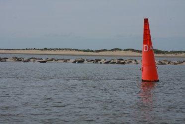 Zeehonden spotten - Waddenzee - Waddentochten - Groningen